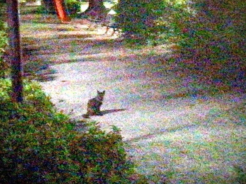 散歩道で出会った猫