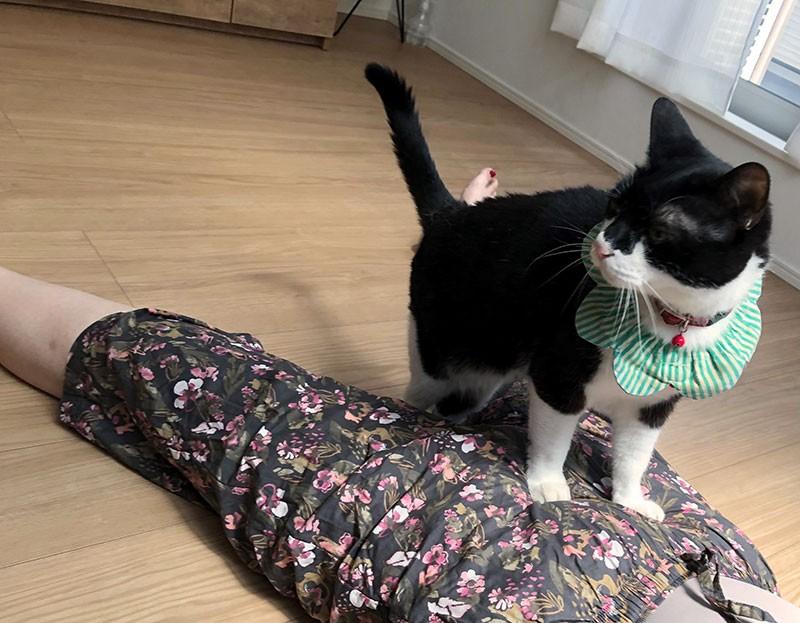 お腹に乗る白黒猫岩海苔