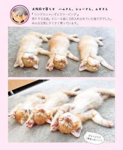 ヘソ天する子猫たち
