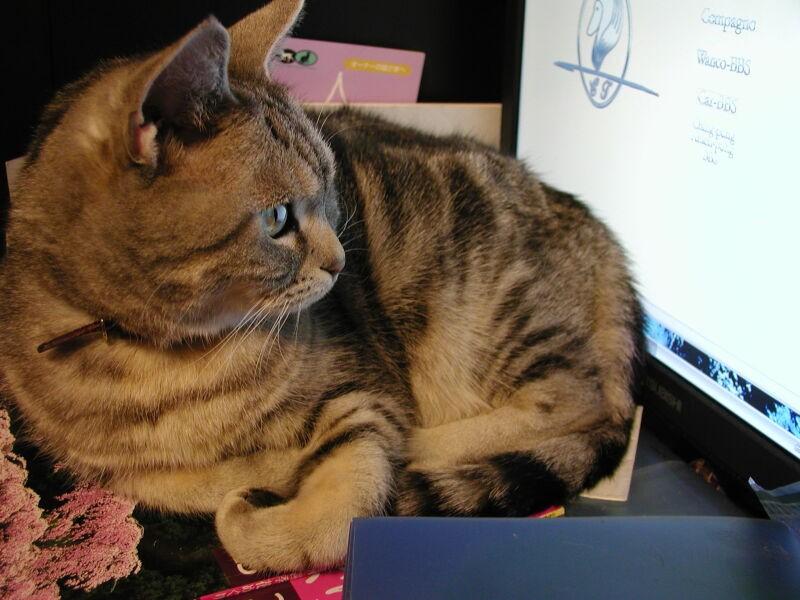 パソコンのキーボードの上が大好きだったココ。何度エラーを起こされたことか…!