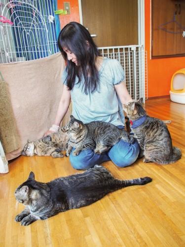 女性に甘える猫たち