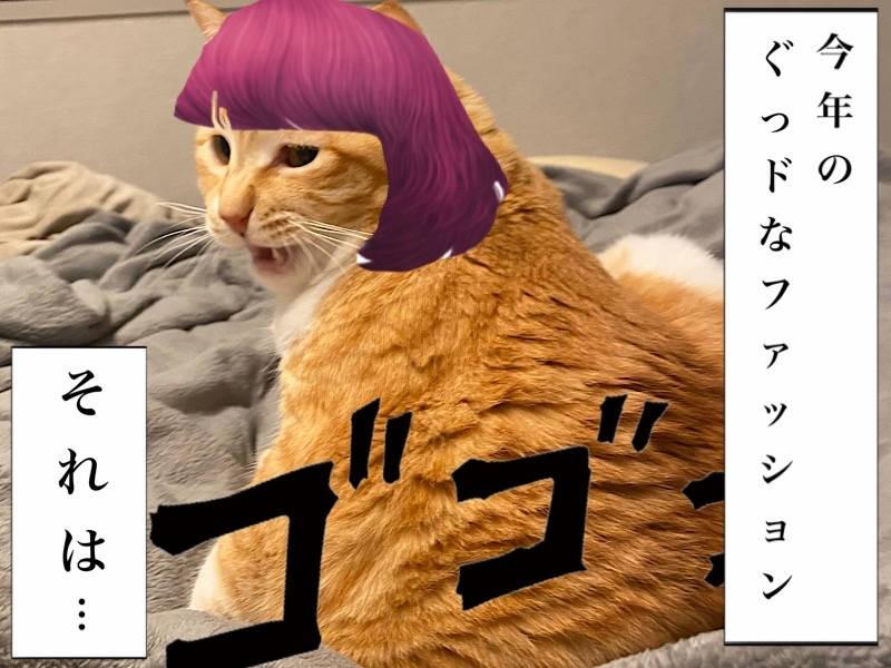 お太りさま猫ぐっぴー写真マンガ「ぐっぴーのたぷたぷ日記」3コマ目