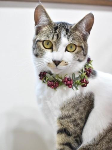 首飾りをした猫