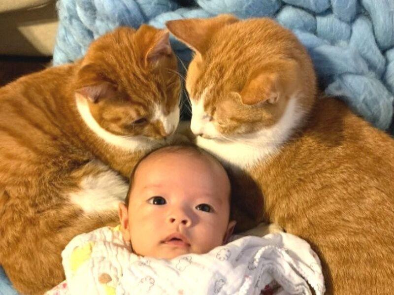 2匹の猫と赤ちゃん