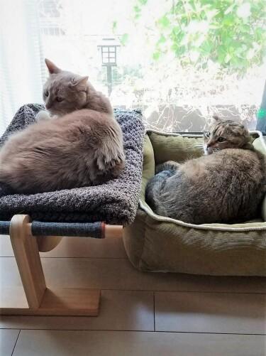 日なたぼっこする2匹の猫