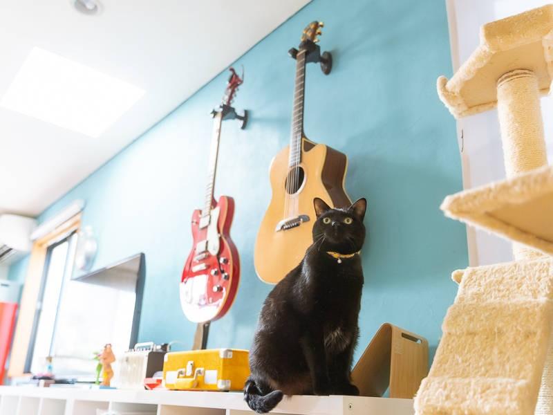 ギターと黒猫「九兵衛」