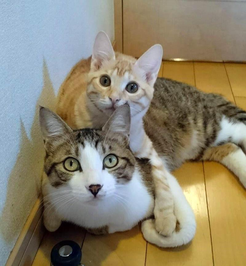 新入り 猫 猫 先住