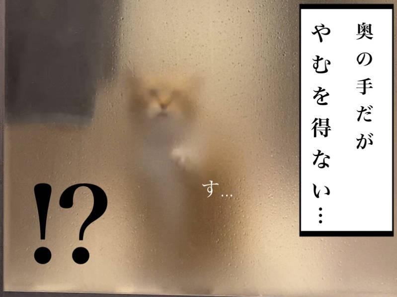 猫写真マンガ「ぐっぴーのたぷたぷ日記」8