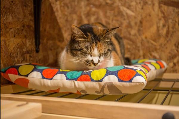 保護猫に出会えるゲストハウス 世界の猫好きがやって来る Sippo