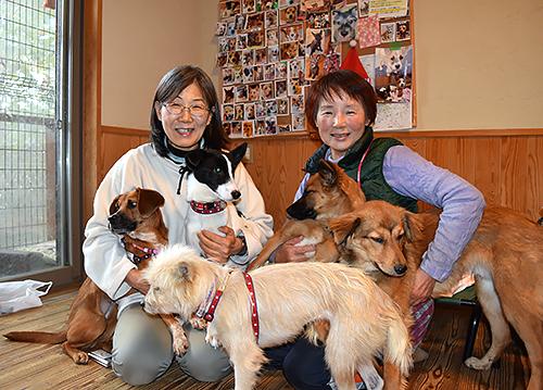 犬 大阪 保護 子犬の里親募集|動物愛護団体 エンジェルズ