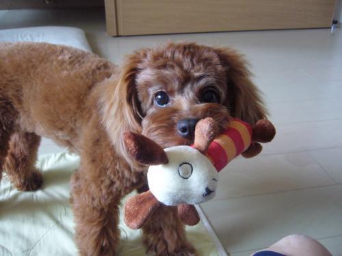犬 ドックフード 食べ ない